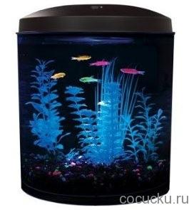 Glofish – аквариум со светящимися жителями
