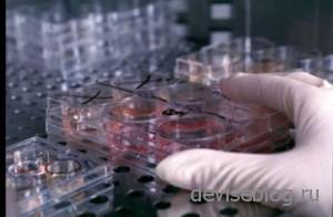 Преимущества и недостатки клонирования
